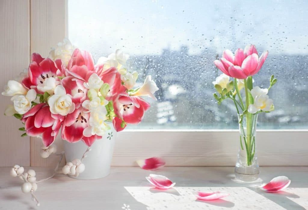 flowers on window| Shaping up for spring