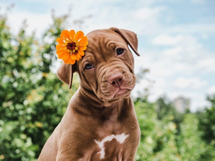 6 tips to get your dog ready for summer e1608416228558| 6 tips to get your dog ready for summer e1608416228558