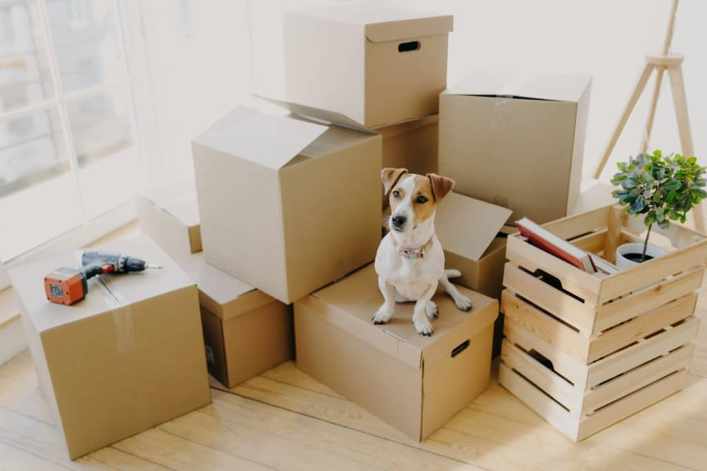 dog on a box| Top tips for moving house with your dog