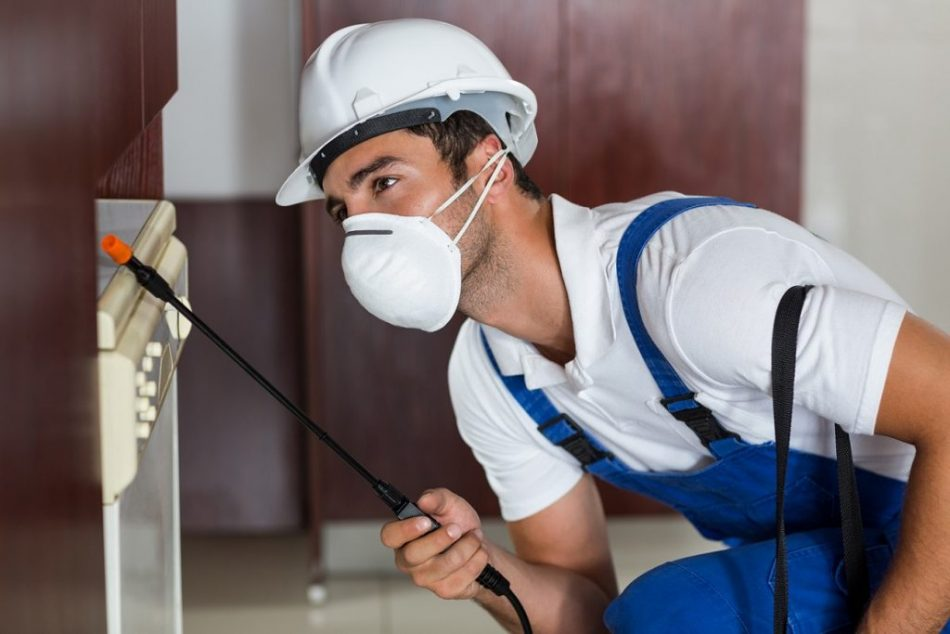 protecting your home against pest invasion| protecting your home against pest invasion